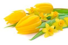 tulipes de jonquilles Photographie stock libre de droits
