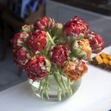 Tulipes de perroquet photographie stock libre de droits