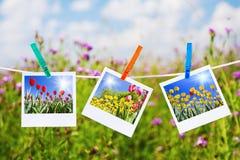 Tulipes de photo Image libre de droits