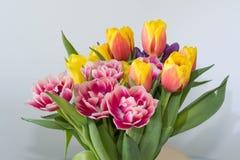 Tulipes de ressort Photo libre de droits