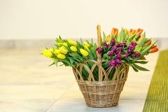Tulipes de ressort dans le panier en bois Photographie stock