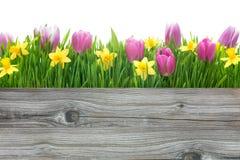 Tulipes de ressort et fleurs de jonquilles images libres de droits