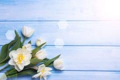 Tulipes de ressort frais et fleurs blanches de narcussus sur le dos en bois Image libre de droits