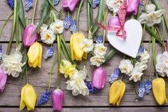 Tulipes de ressort, narcisse, fleurs de muscaries et coeur colorés Photos libres de droits