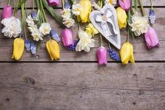 Tulipes de ressort, narcisse, fleurs de muscaries et coeur colorés Images stock