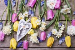 Tulipes de ressort, narcisse, fleurs de muscaries et coeur colorés Photographie stock