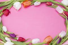 Tulipes de ressort image libre de droits