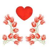 Tulipes de rouge d'aquarelle Photographie stock libre de droits