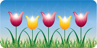Tulipes de source Photos stock