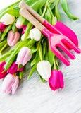 Tulipes de source et outils de jardin Photo stock