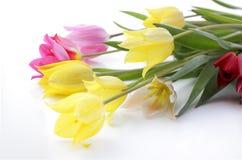 Tulipes de zone Photo libre de droits