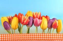 Tulipes devant le ciel bleu Photographie stock libre de droits