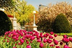 Tulipes en fleur images libres de droits