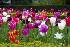 Tulipes en parc de la Hollande, Londres image stock