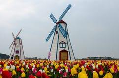 Tulipes en stationnement Image libre de droits