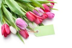 Tulipes et étiquette fraîches avec l'espace de copie Photographie stock