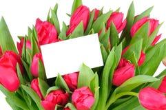 Tulipes et carte de voeux d'isolement sur le blanc Photos stock