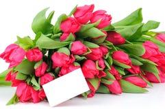 Tulipes et carte de voeux d'isolement sur le blanc Image libre de droits
