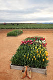 Tulipes et chaussures en bois images stock