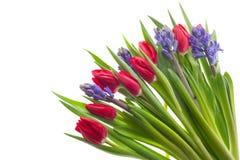 Tulipes et jacinthes photos libres de droits