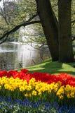 Tulipes et jonquilles à la frontière d'un étang avec la fontaine image stock