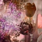 Tulipes et lilas Photos stock