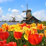 Tulipes et moulins à vent hollandais Image stock