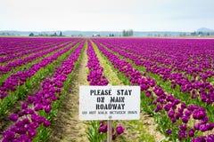 Tulipes et signe Images libres de droits