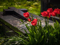 Tulipes et tombe rouges photo libre de droits