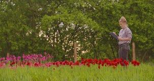 Tulipes femelles de Walking While Examining de chercheur au champ clips vidéos