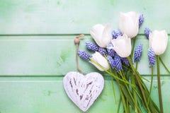 Tulipes, fleurs bleues de muscaries et coeur décoratif sur l'OE vert Image libre de droits