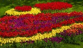 Tulipes - fleurs de ressort Photographie stock libre de droits