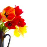 tulipes fraîches photos stock