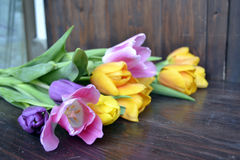 Tulipes fraîches colorées de source Image stock