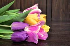 Tulipes fraîches colorées de source Photographie stock libre de droits