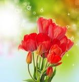 tulipes fraîches de jardin sur le backgr abstrait de nature de ressort Photographie stock libre de droits