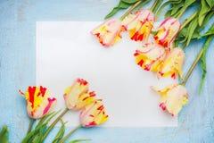 Tulipes fraîches de ressort avec la carte de papier blanc sur le fond en bois bleu, vue supérieure, cadre Photographie stock libre de droits