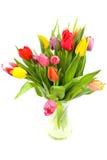 Tulipes hollandaises colorées Photographie stock libre de droits