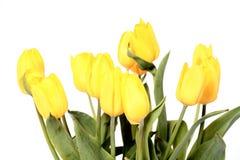 Tulipes jaunes Image stock