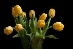 Tulipes jaunes Photographie stock libre de droits