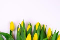 Tulipes jaunes en gros plan d'isolement sur le fond blanc image libre de droits