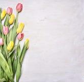 Tulipes jaunes et roses de ressort, étendues à une frontière en bois blanche de fond, endroit pour la fin rustique en bois u de v photographie stock