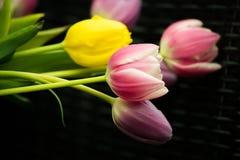 Tulipes jaunes pourpres roses néerlandaises dans l'eau avec les feuilles vertes image stock
