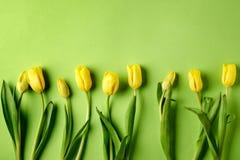Tulipes jaunes sur le fond vert Images libres de droits