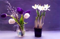 Tulipes lilas et blanches dans une cruche en verre et des crocus dans un pot, sur un fond foncé photos libres de droits