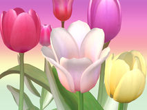 Tulipes lumineuses Illustration Stock