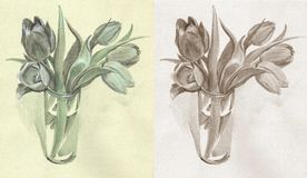 Tulipes monochromes Photographie stock