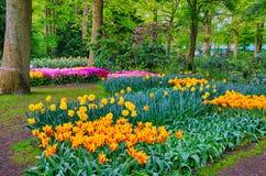 Tulipes oranges colorées, parc de Keukenhof, Lisse en Hollande photographie stock libre de droits