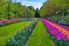 Tulipes oranges et pourpres colorées, parc de Keukenhof, Lisse en Hollande image stock