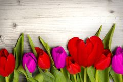 Tulipes Stock Images